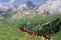 フランス 畜産
