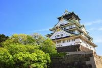 大阪府 大阪城 天守閣と青空
