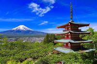 山梨県 新倉山浅間公園の新緑と忠霊塔と富士山