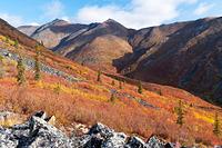 山岳ツンドラ地帯の紅葉