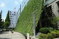 東京都 グリーンカーテンと日陰