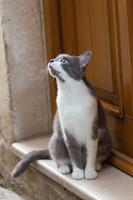 ドゥブロヴニク旧市街 玄関で待つ猫