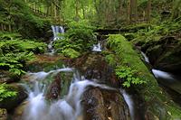 福井県 初夏の瓜割の滝