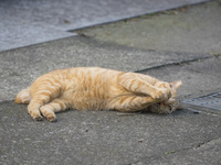神奈川の猫