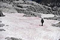 伊アルプスの氷河、ピンク色に染まる