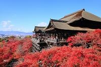 京都府 清水寺 本堂舞台と紅葉