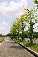 東京都 新緑
