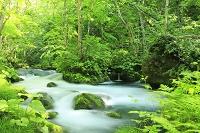 新緑の奥入瀬渓流 三乱の流れ