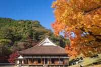 紅葉の楷の木と旧閑谷学校
