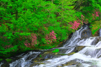 栃木県 奥日光 初夏の竜頭滝とツツジ