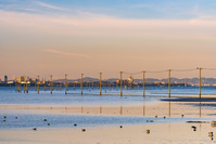 千葉県 早朝の江川海岸の電柱