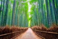 京都府 竹林