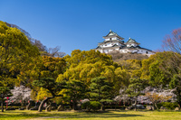 和歌山県 桜咲く和歌山城