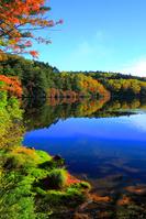 長野県 北八ヶ岳・白駒池の紅葉