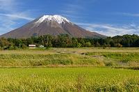 鳥取県 伯耆町 桝水高原から見た新雪の大山