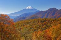 山梨県 奈良子林道より望む富士山と紅葉と山並み