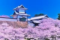 石川県 桜咲く春の石川門