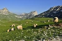 モンテネグロ ドゥルミトル国立公園