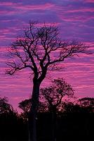 アフリカ マダガスカル