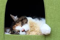 猫と猫のお家