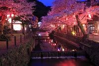 兵庫県 城崎温泉の夜桜