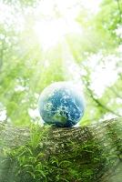 樹木と地球