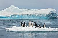 南極 ポーレット島 アデリーペンギンの群れ