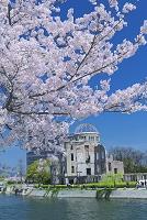 広島県 桜と原爆ドーム