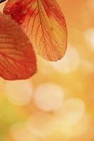 秋田県 大沼付近の紅葉