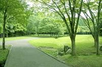 新緑の木立と芝生の公園