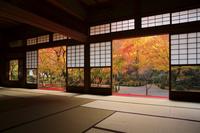京都府 圓光寺 講堂から見る十牛之庭の紅葉