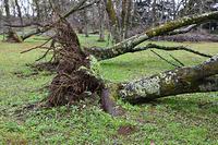 台風被害で倒れた木