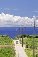 沖縄県 波照間島 サトウキビ畑