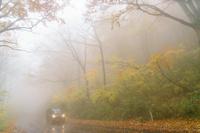 青森県 白神山地 霧のブナ林の紅葉