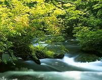 青森県 ツツジ咲く奥入瀬渓流