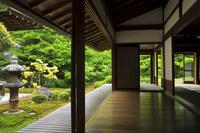 京都府 新緑の源光庵