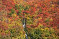 山形県 紅葉の最上川の白糸の滝