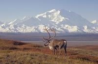 アラスカ マッキンレー山