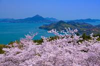 愛媛県 桜咲く開山公園より岩城島遠望