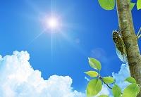 枝にとまるセミと太陽 (CG)