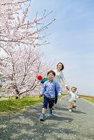 桜の咲く土手を歩く日本人親子