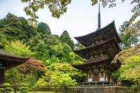 滋賀県 新緑の西明寺 三重塔(国宝)