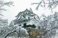 滋賀県 雪の彦根城