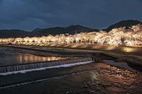 山形県 山形市 夜桜