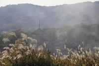 奈良県 ススキと法起寺