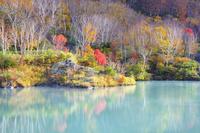 青森県 八甲田の地獄沼の紅葉