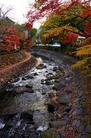 静岡県 修善寺温泉の紅葉と桂川