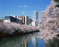 神奈川県 ランドマークタワーと大岡川
