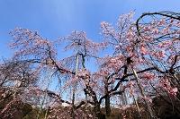 東京都 小石川後楽園