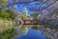 兵庫県 サクラ咲く城見橋と姫路城天守閣